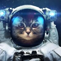 Schiebepuzzle mit dem Motiv Space Cat
