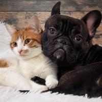 Schiebepuzzle mit dem Motiv Wie Katz und Hund