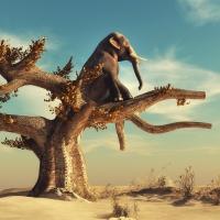 Schiebepuzzle mit dem Motiv Der Elefant der sich für einen Vogel hielt