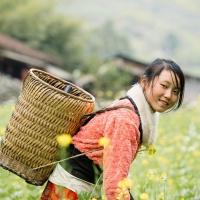 Schiebepuzzle mit dem Motiv Asiatisches Mädchen bei der Feldarbeit